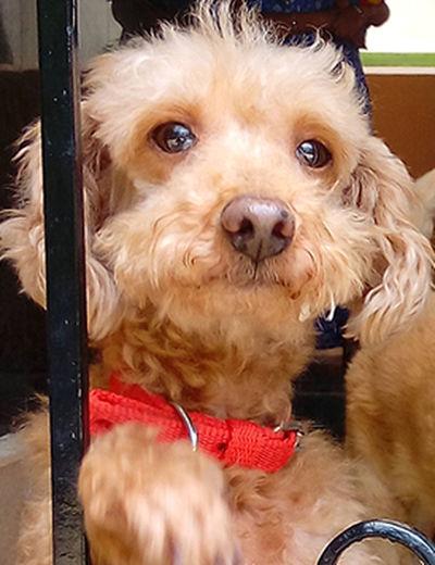 Awww So Cute <3 Cute Dog  Dog Domestic Animals Furry Dog Pets Puppy Red Ribbon Bow First Eyeem Photo