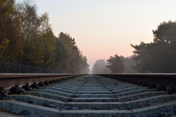 Tree Railroad Track Rail