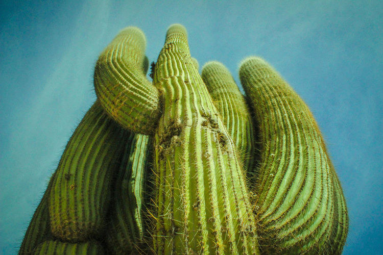 Low Angle View Of Cactus Against Sky
