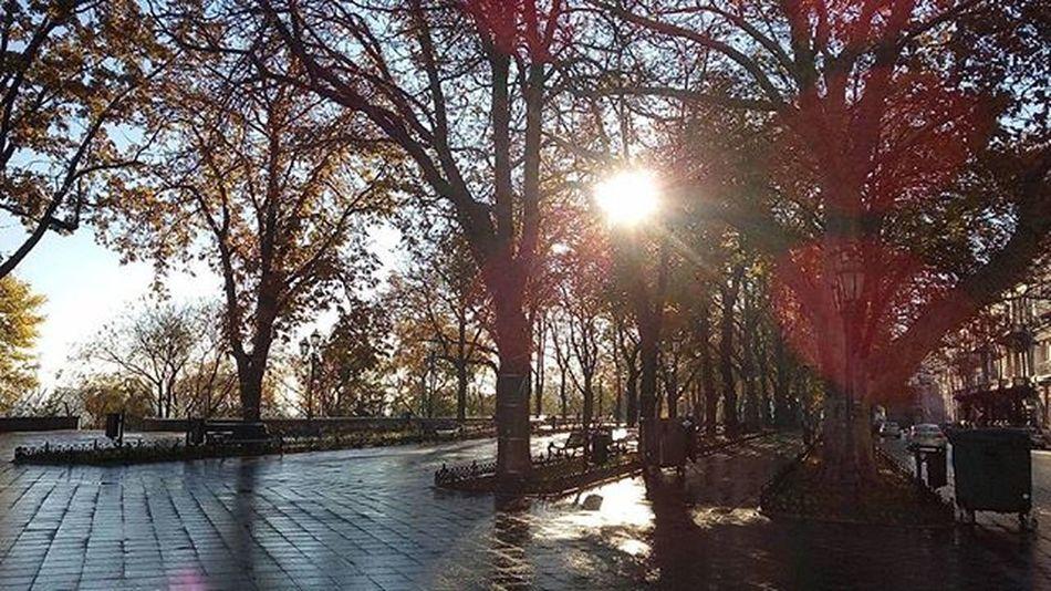 Sunshine Sun Trees Boulevard