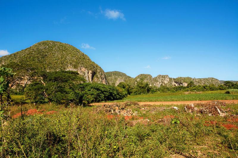 Panorama of the Vinales Valley with the Mogotes Cuba Hills Mogotes Viñales Cuba Nature Rural Viñales Viñales Valley, Cuba Caribbean Countryside Hill Landscape Mogotes Mountains Pinar Tropical Valley Vinales Cuba Viñales Valley