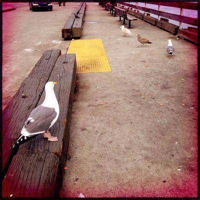 Yellow Sea Gull Dock Hipstamatic