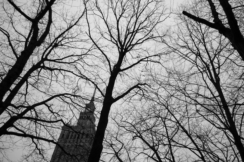 Poland Warsaw Europe Tree Bare Tree Branch Low Angle View Plant Sky No People Silhouette Nature Tranquility Outdoors Tree Trunk Trunk Day Beauty In Nature Scenics - Nature Spooky Backgrounds Forest Tree Canopy