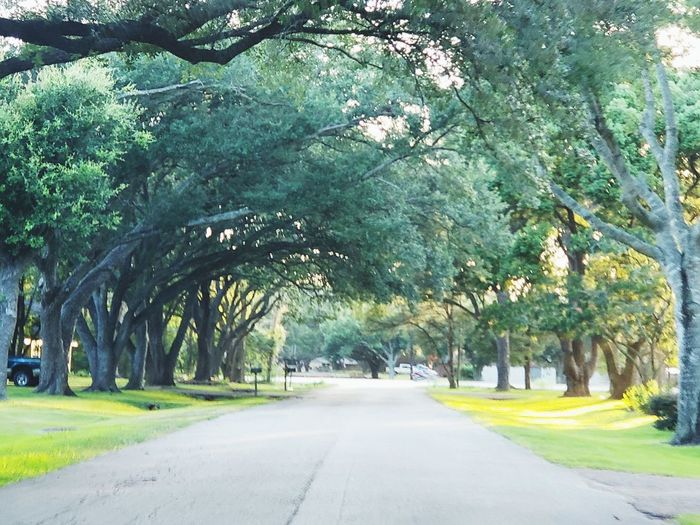 My hometown EyeEmNewHere Trees Texas #EyeEmNewHere Tree Road Sunlight Green Color Sky Empty Road Treelined Diminishing Perspective Pathway The Way Forward vanishing point