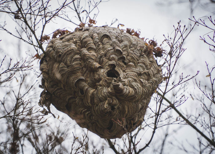 Low angle view of hornets nest on tree