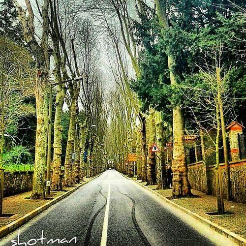 Beykozkorusu Beykoz Koru Ağaçlıyol ağaç yol manzara doğa yeşil 34 bosphorus istanbul turkey