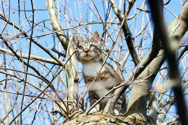 young grey kitten hunting birds in tree. Animal Themes Animals In The Wild Cat Day European Cat Gray Cat Grey Grey Cat Hunting Hunting Cat Kitten Kittens Low Angle View Nature No People One Animal Outdoors Petal Sky Tree Young