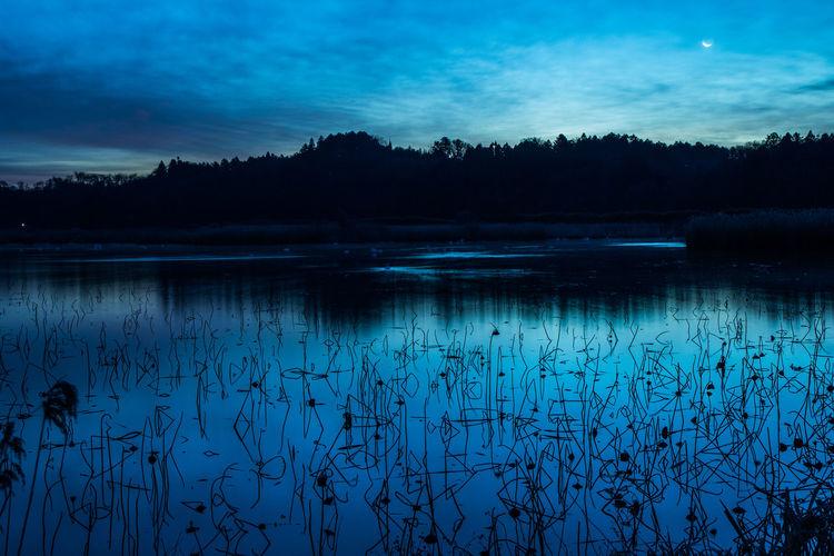 Lake Morningglow Swan
