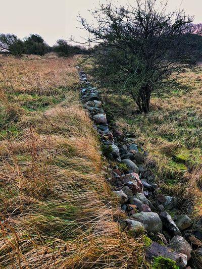Scotland Visit Scotland Nature Grass Tranquil Scene Tranquility Landscape No People Field