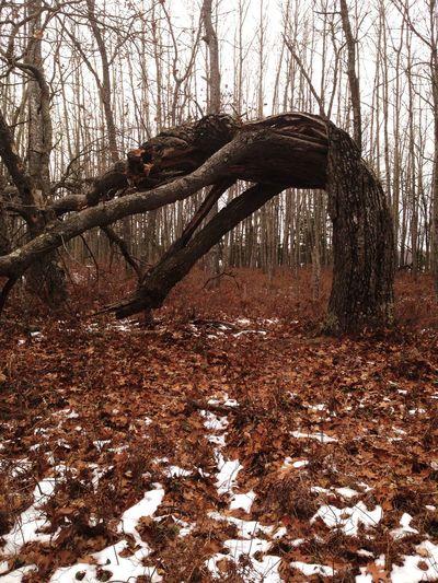Northern Michigan Fall In Northern Michigan Fall Colors Eventhestrongestbreak