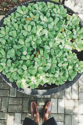Planter Pot Planter Nature Showcase July Floral Green Sandals Paving Stone Foot Feet Pond Water Plants Plants Plant