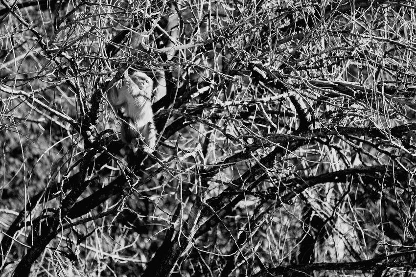 日本猿Live For The Story Place Of Heart EyeEm Place Of Heart Grey EyeEm Black & White Foto Black Yamanashi,japan The Week On EyeEm EyeEmNewHere