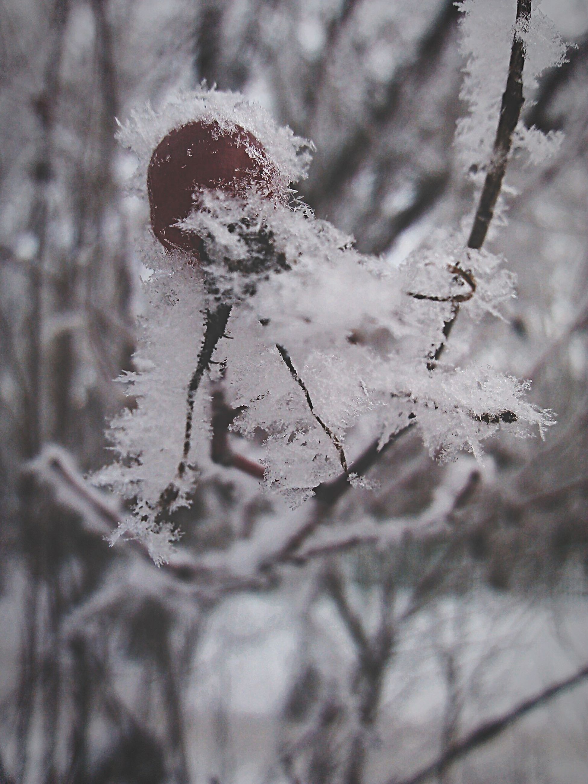 winter, cold temperature, focus on foreground, snow, close-up, nature, frozen, weather, season, selective focus, plant, day, dead plant, outdoors, dry, branch, tranquility, growth, tree, no people