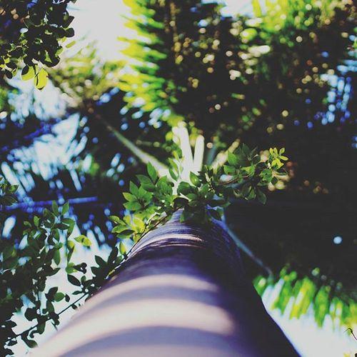 .... PERCEPTION.... Tree Tall Green Nature Photography Naturelovers Nature_perfection Natureporn Fauna India_clicks Cool_capture_ Waycoolshots Bestshots Oyeitsindia _oye _soiwalks _soi Tagsforlikes Picoftheday Igsworld Igs_asia Puneinstagrammers Punediaries Puneclickarts