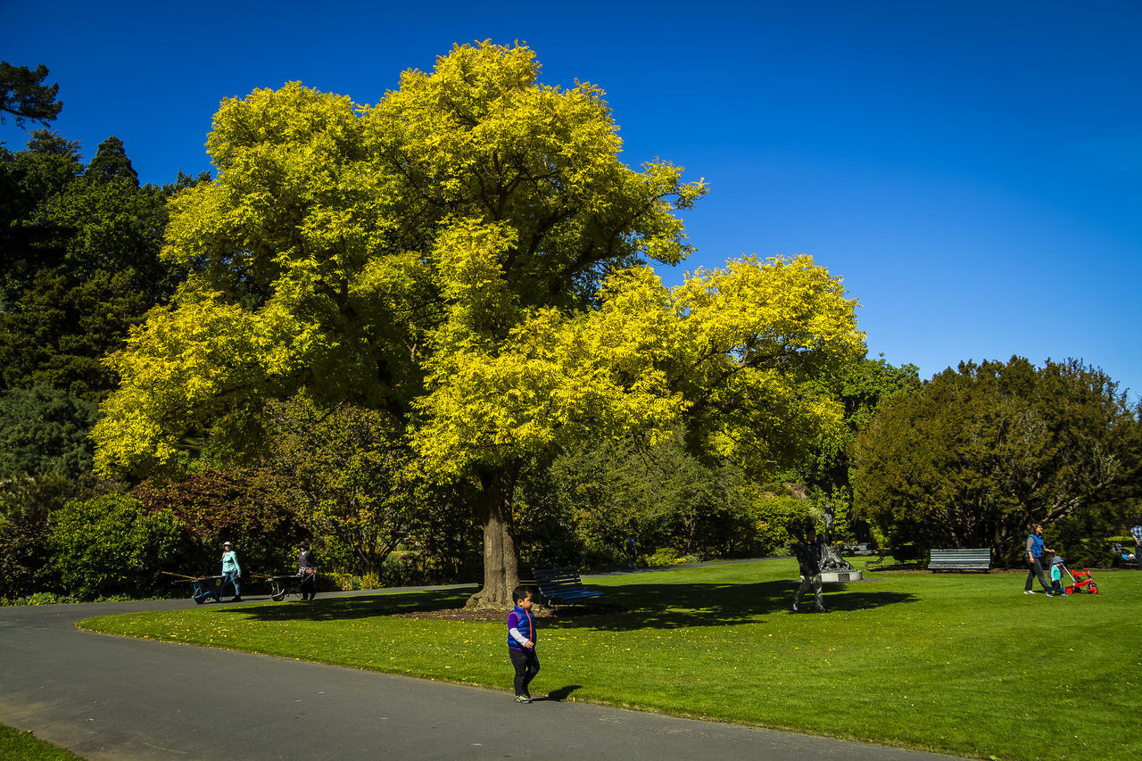 tree, growth, green color, nature, real people, outdoors, day, park - man made space, grass, leisure activity, men, beauty in nature, full length, clear sky, sky, one person, golf course, golfer, adult, people