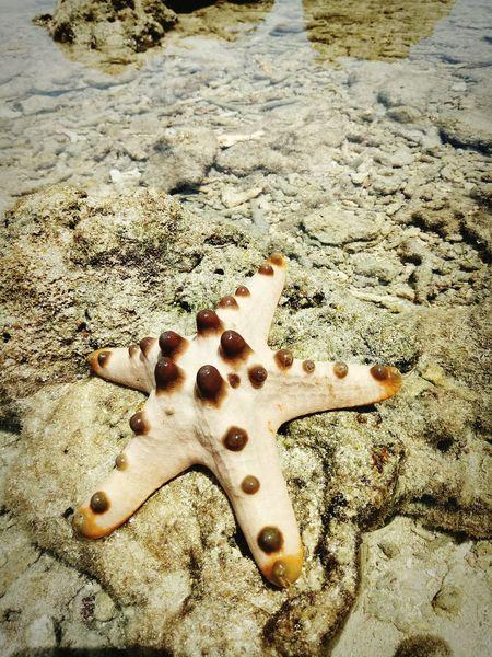 EyeEm Selects Starfish  Sea Life StarfishBeSoCute Star Shape Starfish At Beach
