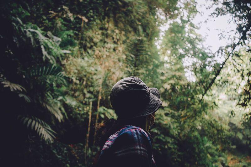 around me Tree