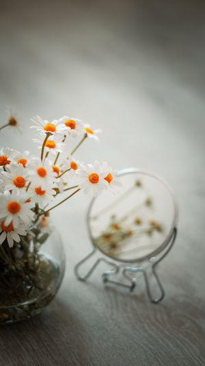 Close-up of orange flower on table