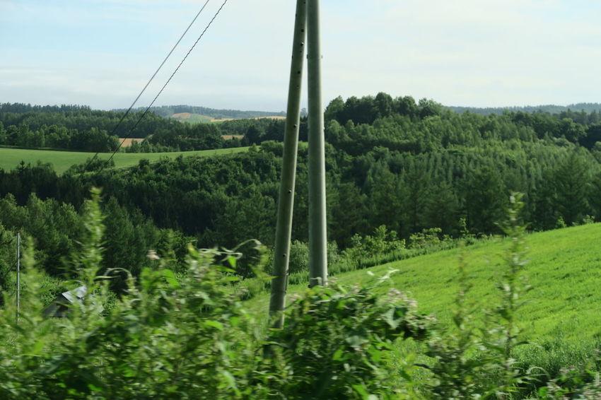 biei hokkaido japan Biei Green Hokkaido Nature Tree Blue Sky Clouds And Sky Grouth Leaf Mountain Outdoors Summer Sunnyday