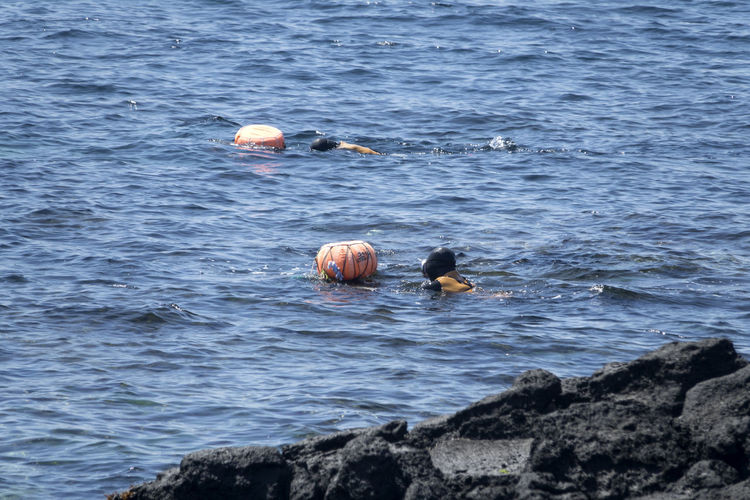 Haenyeos who are female divers picking up sea food in sea. Diving JEJU ISLAND  Animal Themes Animal Wildlife Animals In The Wild Beauty In Nature Bird Day Female Diver Haenyeo Mammal Nature No People One Animal Outdoors Rock - Object Sea Swimming Water Waterfront