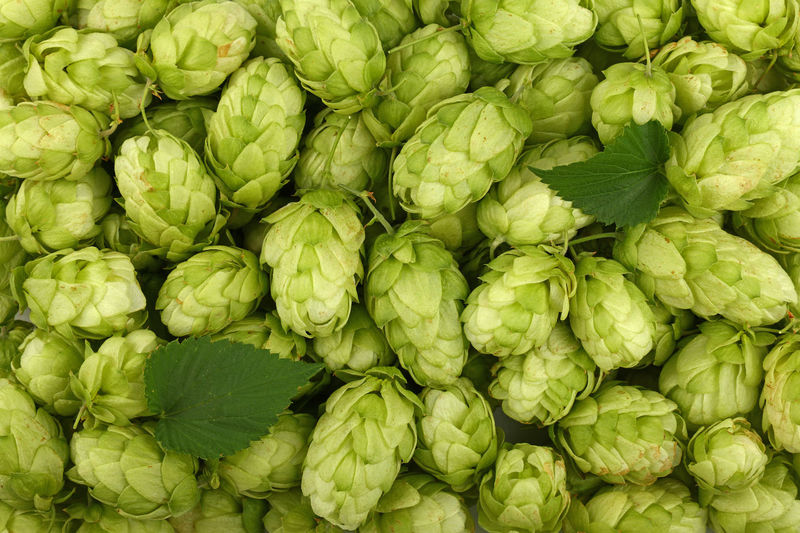 Full Frame Shot Of Beer Hops