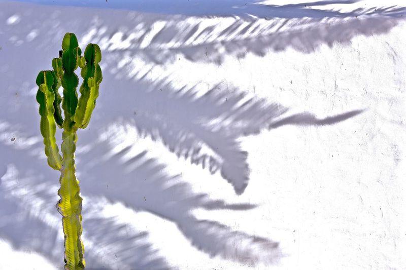 Cactus, Shadows, White Wall, Lanzarote-Canarias Fine Art Photography