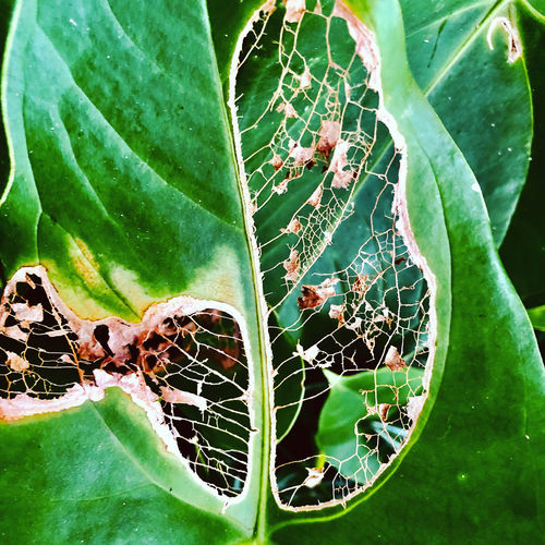 Close-up of green spider web on plant