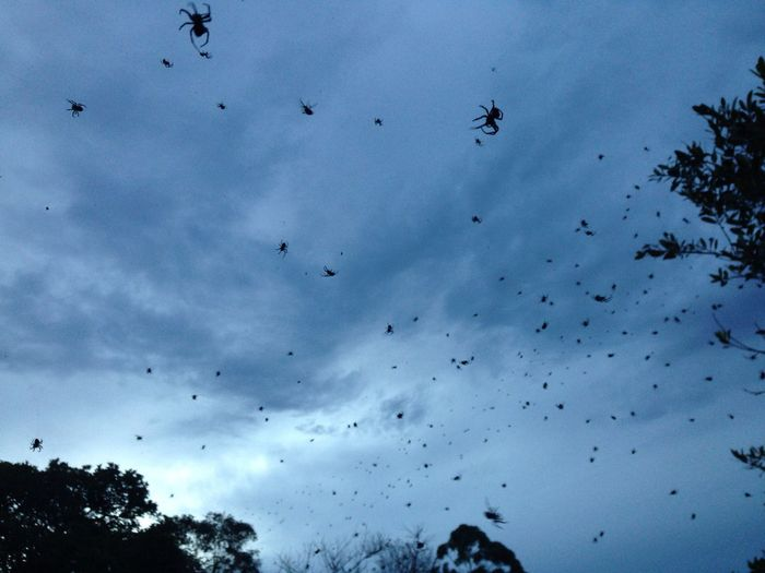 Large Group Of Animals Flying Animals In The Wild Animal Themes Low Angle View Sky Silhouette No People Beauty In Nature Spider Web Spiders