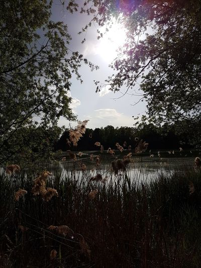 Sander Seen Glowing Nature Lake View Lakescape Sander See Bayern, Germany Sommer Am See