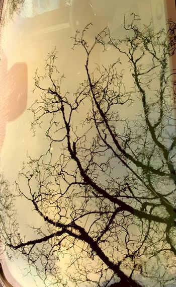 Tree Nature Beauty In Nature No People Bare Tree Branch Outdoors Sky Day Window Screenwindow Car Wet