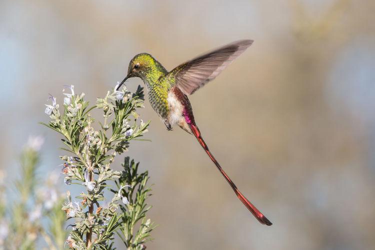 Bird flying in a flower