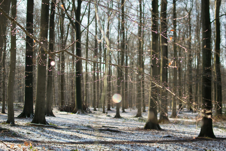 Cold Cold Temperature Defocused Drop Forest In The Forest Nature No People Showcase: January Snow Sonian Forest Trees Winter The Purist (no Edit, No Filter) Magic Forest