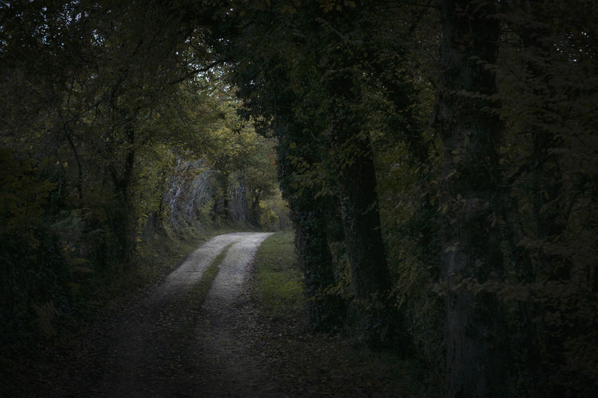 Tree Plant Direction Road The Way Forward Land Forest No People Nature Transportation Dirt Tranquility Outdoors Dirt Road Spooky Beauty In Nature Day Dark Tranquil Scene Growth Treelined Tree Canopy