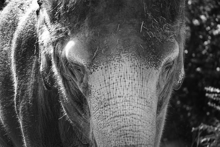 Trunks Close-up Focus On Foreground Day Tree Real People Animal Wildlife Animal Body Part Elephant Animals In The Wild Nature One Animal