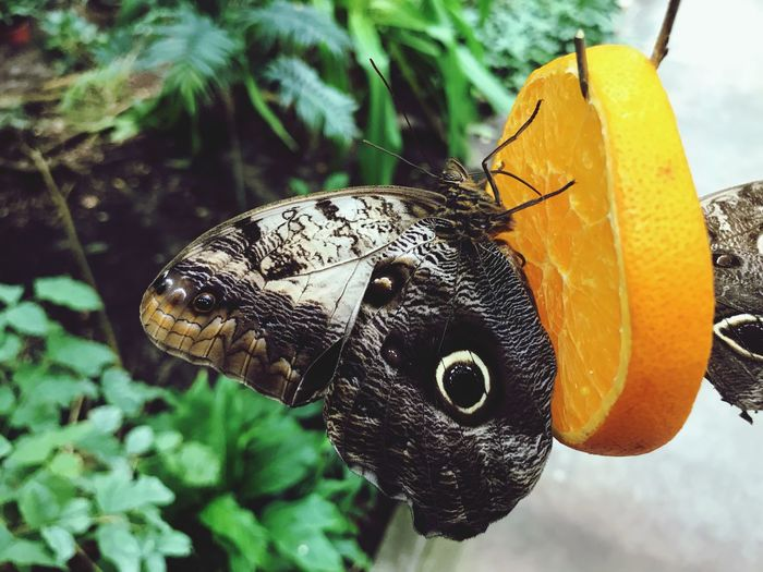 EyeEm Selects Animal Animal Themes Animals In The Wild Insect Invertebrate One Animal