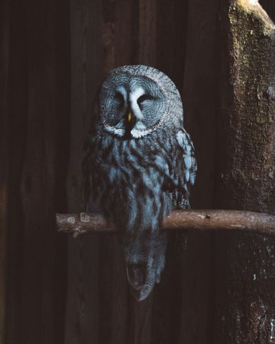 One Animal Animal Themes Bird Bird Of Prey Wood - Material No People Owl Day Nature Animals In The Wild Perching Close-up Outdoors