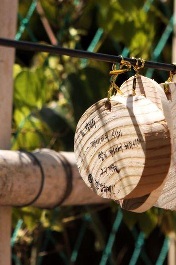 Korea Trip Korea Suncheonman Hanging Close-up Text Focus On Foreground Luck Identity Deterioration Day Outdoors Damaged Symbol Culture Suncheon Bay Suncheon Korea Photos ASIA Travel Korean Adventure Spring Wood Writing