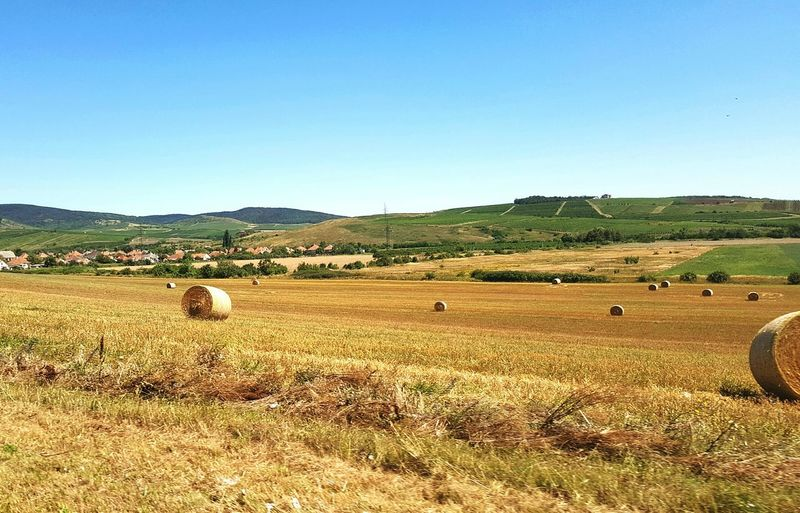 Hay bales on agricultural field against clear blue sky