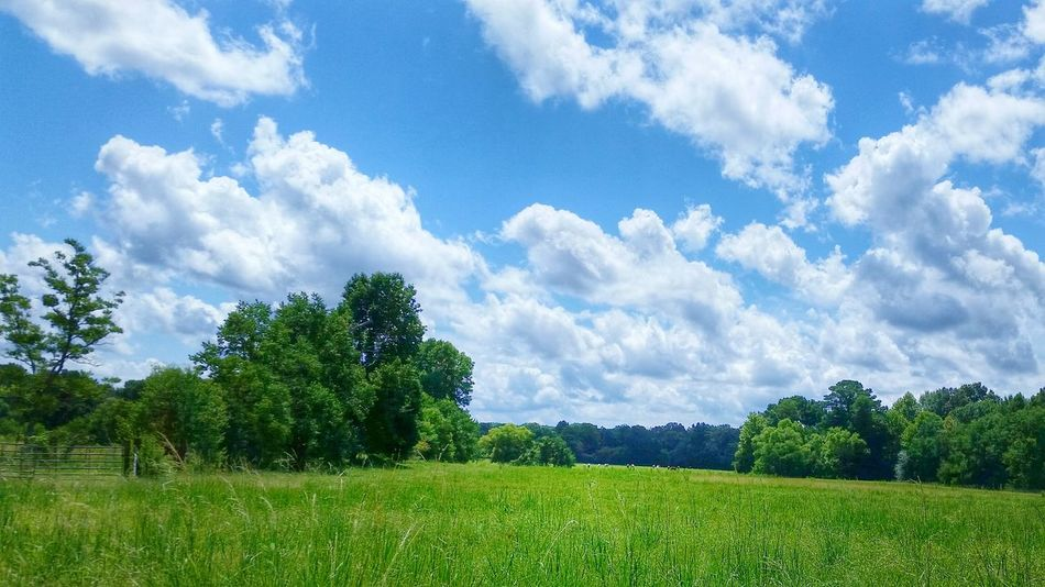 Summer Day Mississippi Summer EyeEm Nature Lover Sky And Clouds Fieldscape Cloud_collection  Sky_collection Beautiful Weather!