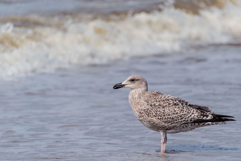 A day at the beach. Animals In The Wild Beach Beachphotography Beauty In Nature Bird Focus On Foreground Nature Northsea One Animal Profile Sea Seagull Side View Tranquility Water Water Bird Water Surface Waterfront Zandvoort Zoology