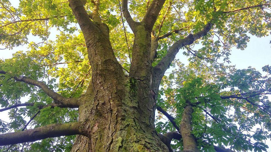 I Like Trees летние деньки день 7. 5 A.M.
