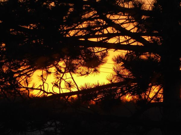 Sundown Through Trees Silhouette Orange Color Beauty In Nature Addicted To Sunlight Tranquility Close-up Tranquility Sunsetlovers Sundown, Nightfall, Close Of Day, Twilight, Dusk, Evening For My Friends 😍😘🎁 View From My Window Sunsetlover Sunsetphotographs EyeEm Best Shots - Sunsets + Sunrise