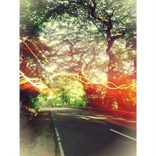 IPhone5 HDR Random Roadlesstravelled travel postprocessed pointnshoot carcar cebu acacia raintree