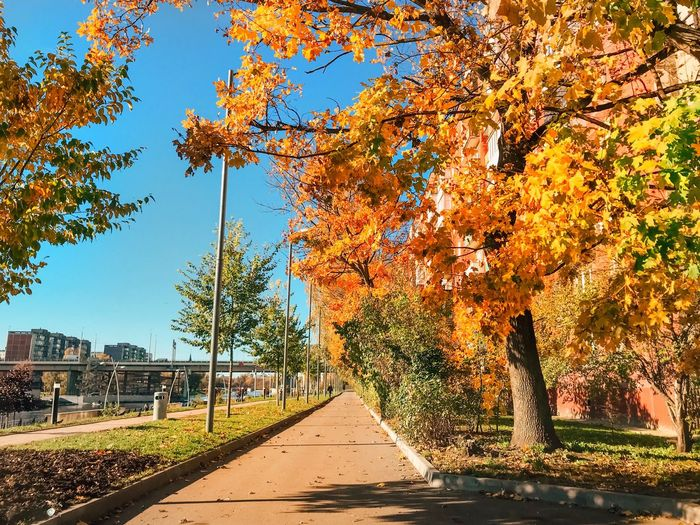 Tree Plant Nature Autumn Sunlight Beauty In Nature Growth Orange Color Outdoors Change Park Land No People Day Shadow Tranquility Field Water Scenics - Nature Sky
