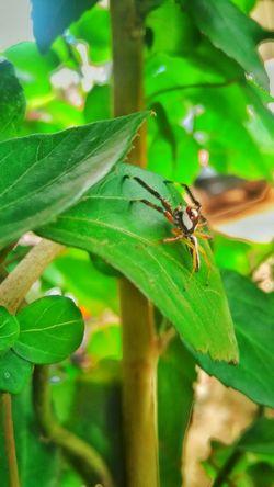 Spider Random_click