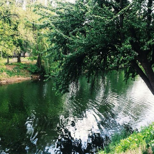 Парк правди весело там где живут мечты 🍃 крачиво оч
