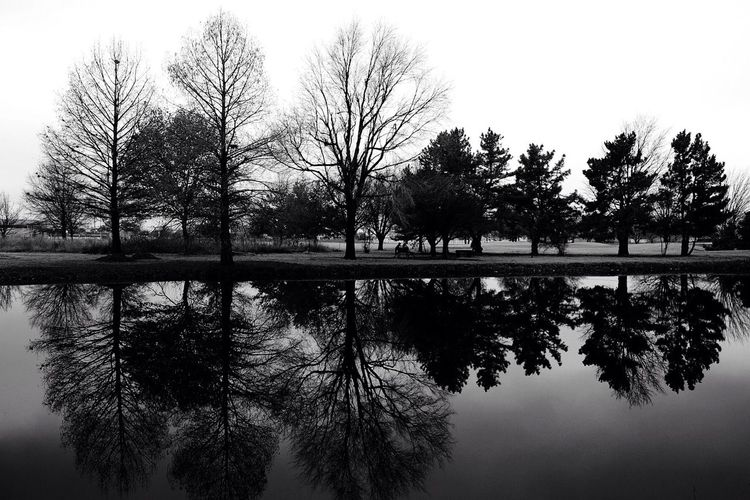 Reflection of trees in calm lake