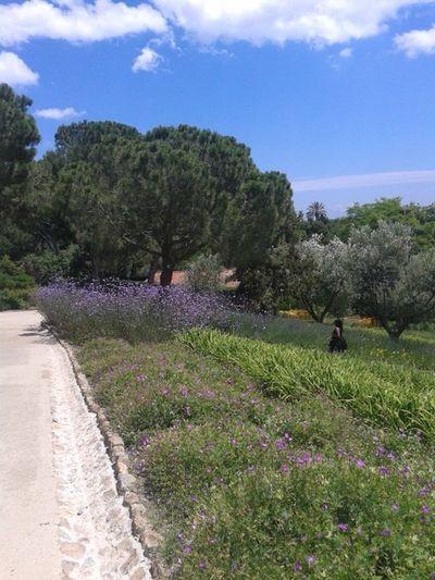 ~Wonderful garden~