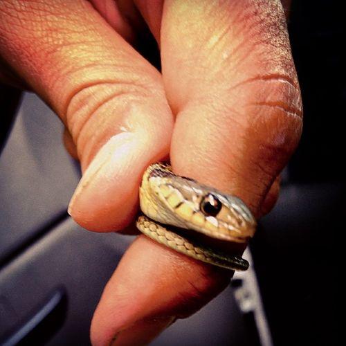 Found a lil garter snake at work today ???? Snake Garter_snake Animal Reptile