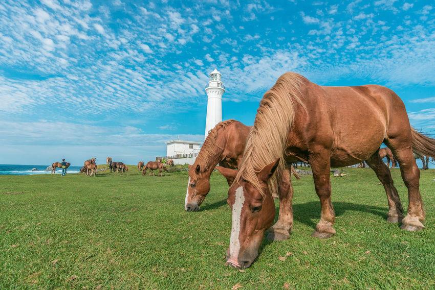 Aomori Horese Riding Horse Ilovejapan Lighthouse Lighthouse_captures Lighthouse_lovers Sky Tohoku Travel